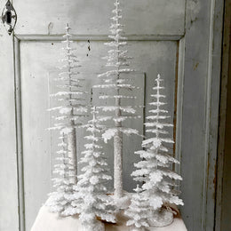 Ino Schaller Spruce Trees in Brilliant White