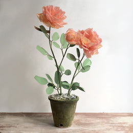The Green Vase Potted Rose