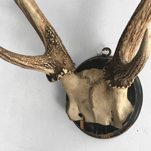 Black Forest Large Antlers