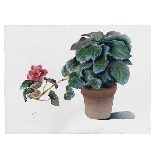 Mid-20th Century Charles De Carlo Plant Watercolor