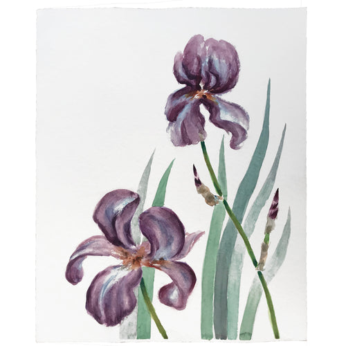 Mid-20th Century Charles De Carlo Iris Watercolor Painting