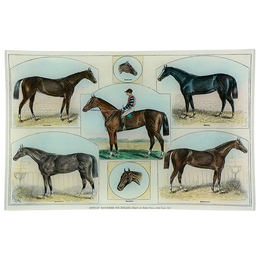American Race-Horses for England