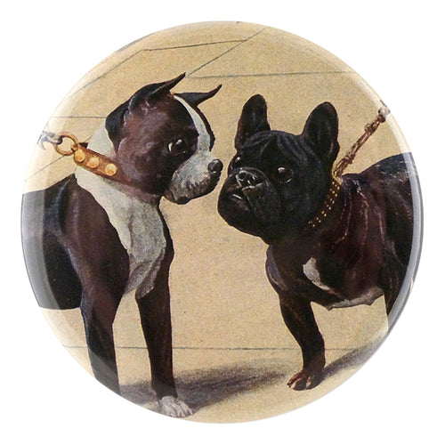 Boston Terrier & French Bulldog