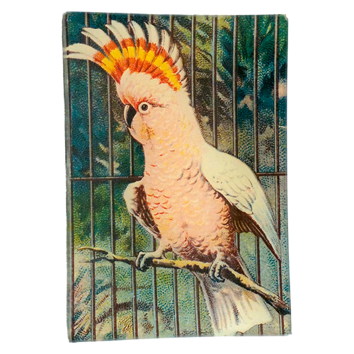 Parrot #3 (Pink)