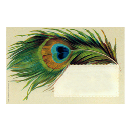 Peacock Feather Name Card printed on heavy card stock