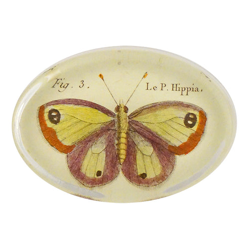 Butterflies (#11) Pl. 32 Fig. 3 Hippia