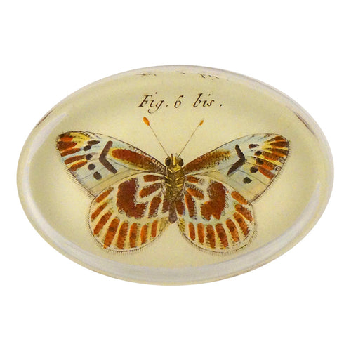 Butterflies (#15) Pl. 32 Fig. 6 bis