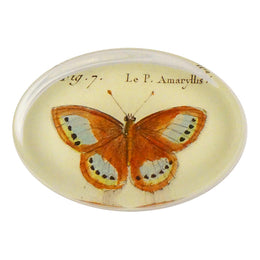 Butterflies (#17) Pl. 32 Fig. 7 Amaryllis