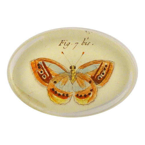 Butterflies (#18) Pl. 32 Fig. 7 bis