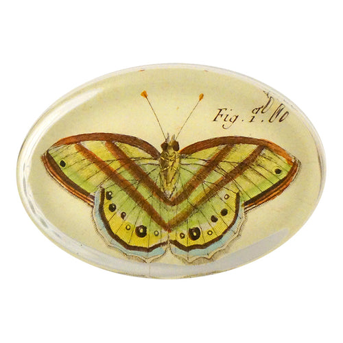 Butterflies (#8) Pl. 32 Fig. 1 bis