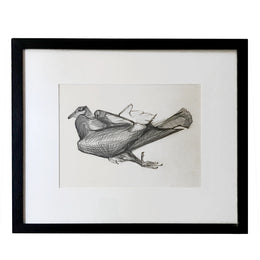 Olga Sears Bird Drawing #1
