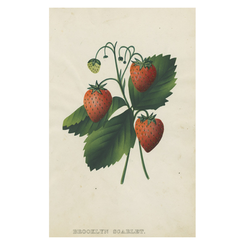 Brooklyn (Strawberry)