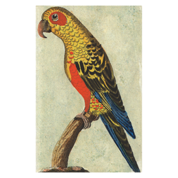 Tropical Bird (Parrot)