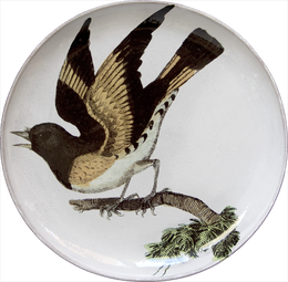 American Red Start (Facing Left) Round Platter