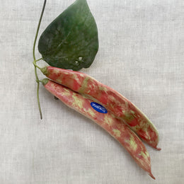 Double Porcelain Borlotti Bean Pod with Leaf