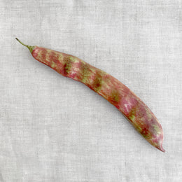 Single Porcelain Borlotti Bean Pod