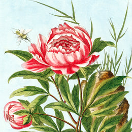 Peony Silk Scarf from the John Derian picture book