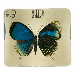 Eumenia (Butterfly)