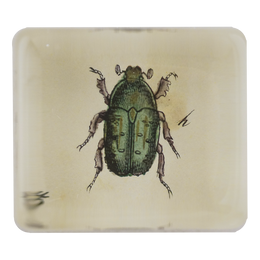 Insect h (Green) - SALE