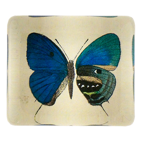 Nautes (Butterfly)
