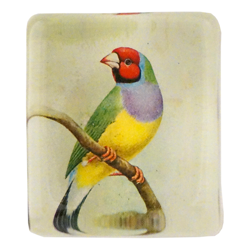 Red-Headed Gouldian Finch