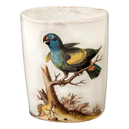 Blue Headed Parrot Cup without Handle
