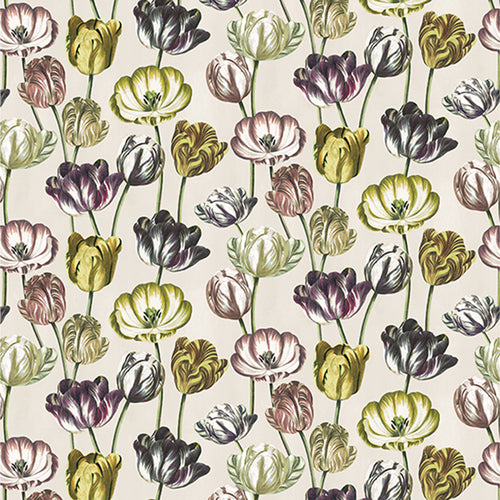 Variegated Tulips Buttermilk