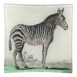 Zebra (Early Animals)