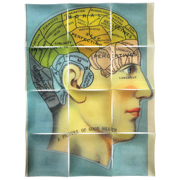 In Good Health (Phrenology Head)