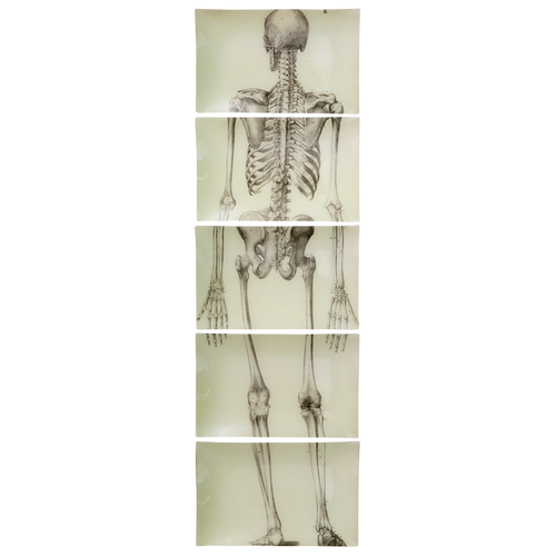 Skeleton, Back View (5 Pieces)