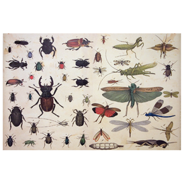 Insects wrapping paper containing a Roll of five Sheets