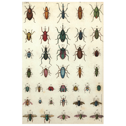 Jeweled Insects wrapping paper which includes a roll of five sheets