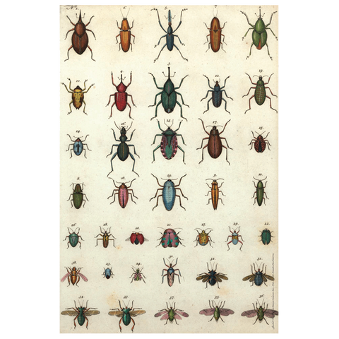 Jeweled Insects