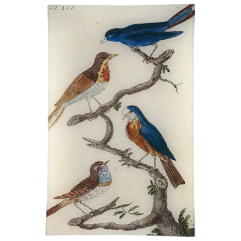 Wilhem's Birds Blue Capped