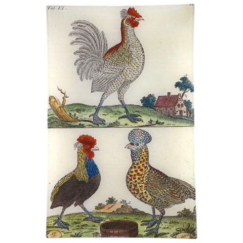 Wilhem's Birds English Rooster & English Hen