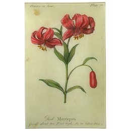 Red Martagon (Floral)