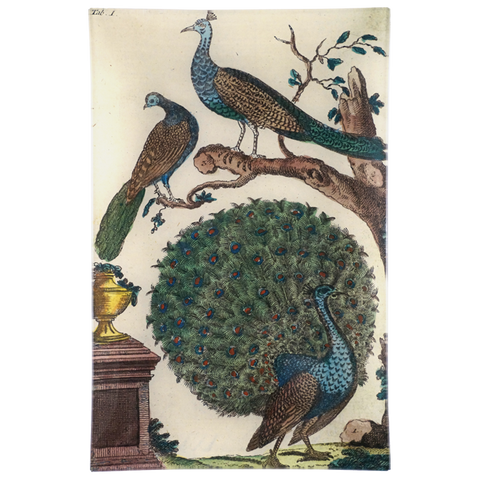 Wilhem's Birds Peacocks