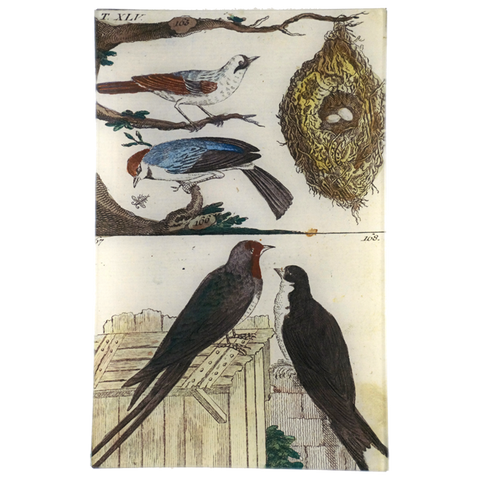 Wilhem's Birds Tit & Swallow