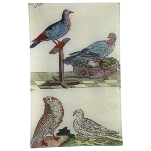 Wilhem's Birds Wild, Field, Goiter & Drum