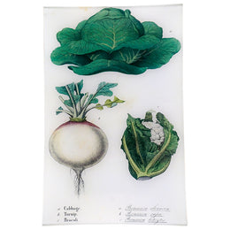 Cabbage, Turnip, Broccoli (Kitchen Vegetables)