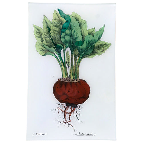Single Beet (Kitchen Vegetables)