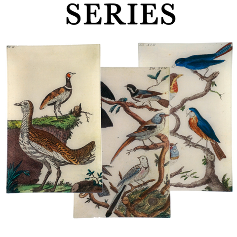 Wilhem's Birds (Series of 31)