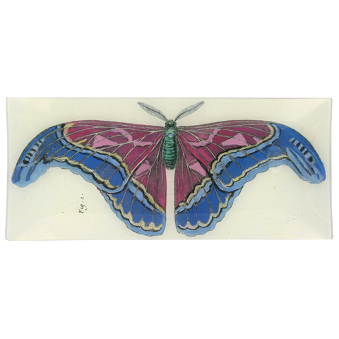 Blue Pink Butterfly