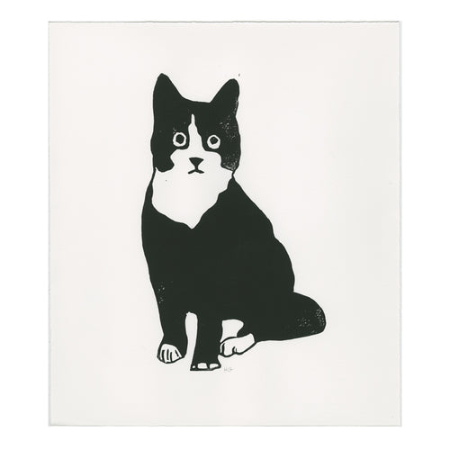 Black and White Cat Seated