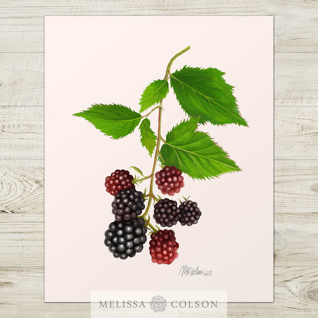 Blackberries Watercolor Giclée Art Print - Melissa Colson