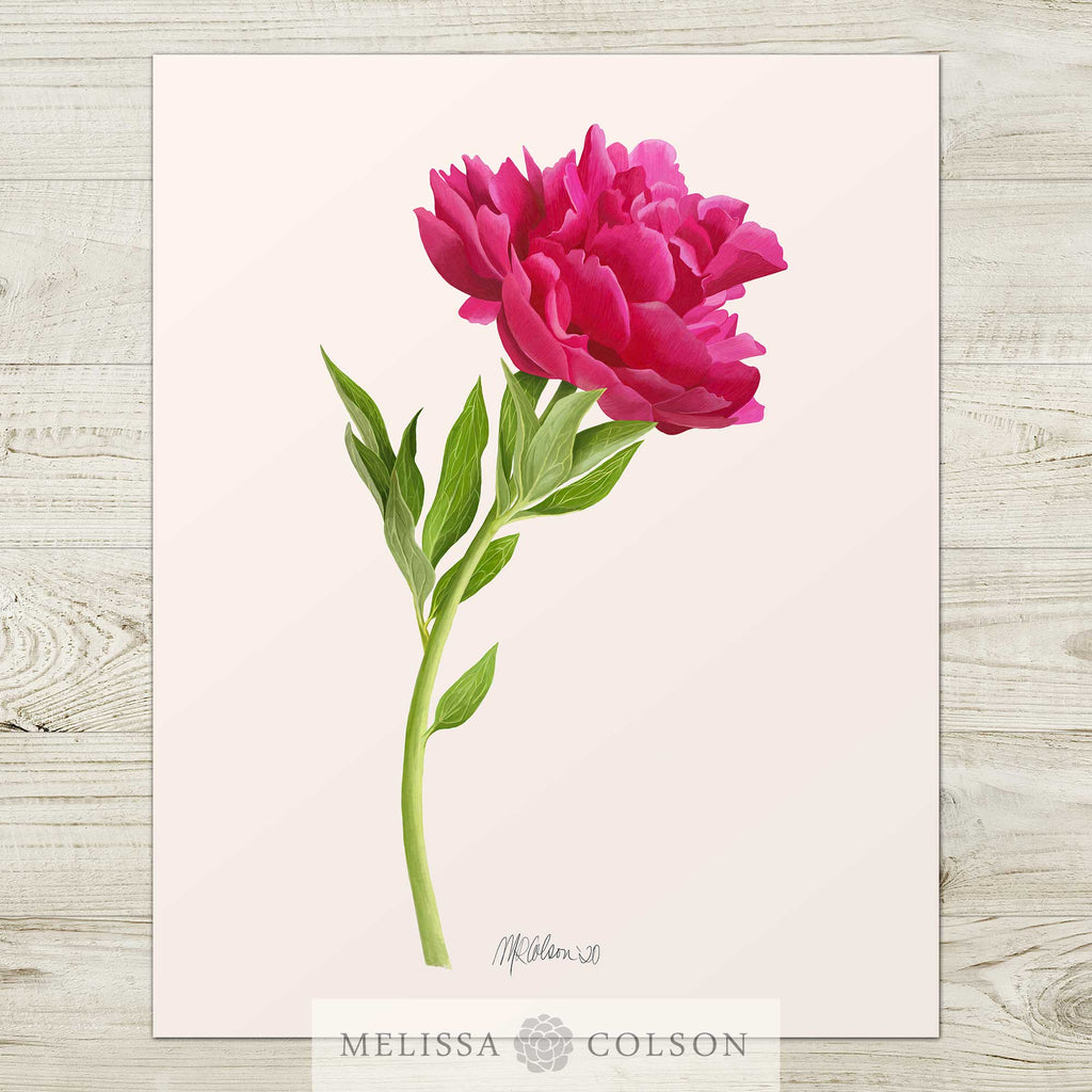 Pink Peony Watercolor Giclée Art Print - Melissa Colson