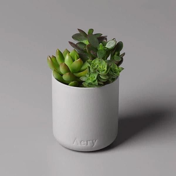 Persian Thyme-Candle-Aery-Totem Store