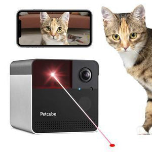 Cat by petcube monitor camera laser toy for cats.