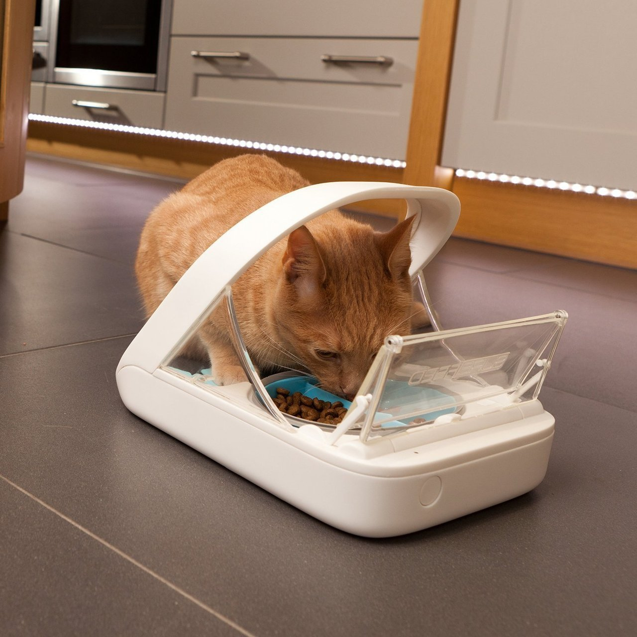 automatic pet feeder for multiple pets
