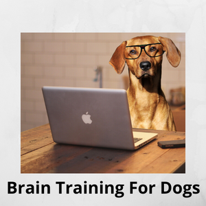 Dog and cat shop for buying pet supplies online shows a dog in glasses in front on a computer and words that say Brain Training For Dogs, for a pet training product for dogs.